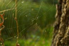 Web y araña Foto de archivo libre de regalías