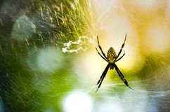 Web y araña en un cielo colorido Fotografía de archivo libre de regalías