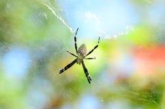 Web y araña en un cielo colorido Fotos de archivo