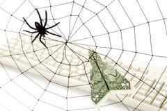 Web y dólar de araña Imagen de archivo