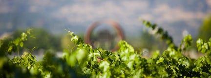 Webbanner voor wijngaard Stock Foto