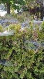 Spiderwebs creepy neighborhood stories royalty free stock images