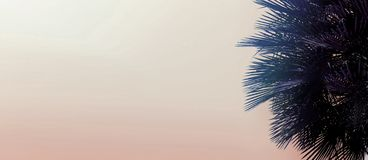 Website header and banner with copy space in light pink color and palm tree. royalty free stock images