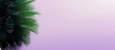 Website heading and banner with copy space in violet color and palm tree. royalty free stock image