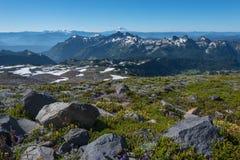 Webstühle Mt Adams hinter Wildflower bedeckten Moutains Lizenzfreies Stockfoto