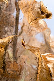 Webworm infestation in a crab apple tree Royalty Free Stock Photo