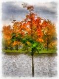 Wechselstrom-Baum im Park - stilisiert zum Malen Lizenzfreie Stockbilder