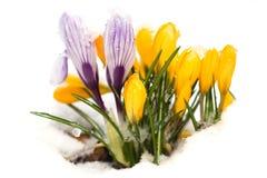 Weckender Frühling Stockbild