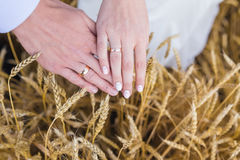 Wed couple's hands with wedding rings Royalty Free Stock Photo
