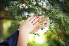 Wed recentemente as mãos do ` s dos pares com alianças de casamento recém-casados que mostram suas alianças de casamento no fundo foto de stock royalty free