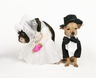 Wedded bliss Royalty Free Stock Images