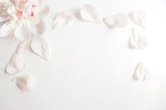 Wedding введенная в моду фотография запаса при голова и лепестки цветка пиона лежа на белой предпосылке Плоский состав положения Стоковые Изображения RF
