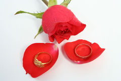 Wedding. Rose and rings Royalty Free Stock Photos