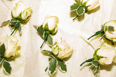 Петлица цветет готовое для wedding замужества Стоковые Изображения