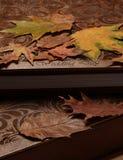 Wedding album and maple leaves Stock Image