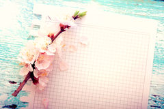 Wedding background. Flowering branch of cherry and Royalty Free Stock Photos