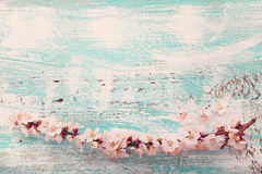 Wedding background. Flowering branch of cherry stock image