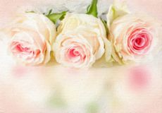 Wedding background with roses. Stock Photography