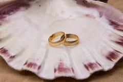 Wedding band on shell. Wedding band on the shell royalty free stock photo