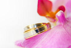 Wedding Bands & Orchid. Wedding rings on a petal of an orchid Stock Image