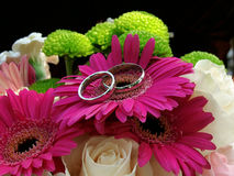 Rings on a daisy Stock Image