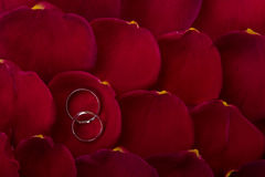Wedding bands on rose petals Stock Image