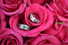 Wedding Bands and Roses. A set of wedding bands in a bouquet of roses Royalty Free Stock Photo