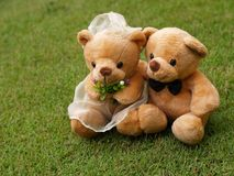 Wedding Bears on the Grass. Wedding Bears on the Botany Garden Royalty Free Stock Image