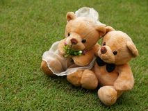 Wedding Bears on the Grass Stock Image