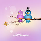 Wedding birds Royalty Free Stock Images