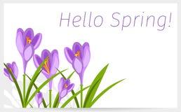 Wedding or birthday invitation spring flower celebration card vector. Stock Photos