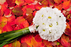 Wedding boquet. White flowee wedding bouquet arrangement on red background Royalty Free Stock Image
