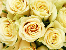 Wedding bouquet. Yellow roses in a wedding bouquet Royalty Free Stock Image