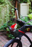 Wedding bouquet in the basket of bicycle Royalty Free Stock Photos