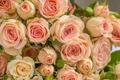 Wedding bouquet of beige roses Stock Photos