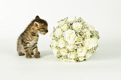 Wedding Bouquet and a cute cat. White roses wedding bouquet and a young cute cat Royalty Free Stock Photos