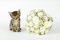 Wedding Bouquet and a cute cat. White roses wedding bouquet and a young cute cat Stock Photography