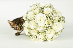 Wedding Bouquet and a cute cat. White roses wedding bouquet and a young cute cat Stock Photo
