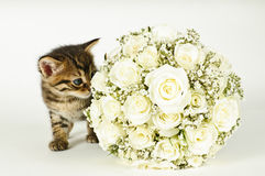 Wedding Bouquet and a cute cat. White roses wedding bouquet and a young cute cat Royalty Free Stock Photo