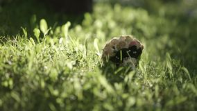 Wedding bouquet in green grass and sunlight summer day stock footage