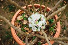 Wedding bouquet lying on a flowerpot. Wedding bouquet of pink and white flowers is lying on a flowerpot Royalty Free Stock Photos