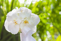 Wedding bouquet made from white orchid Royalty Free Stock Photo