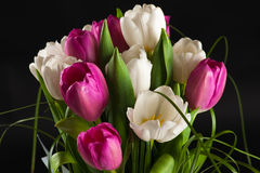 Wedding bouquet of tulips Royalty Free Stock Photography
