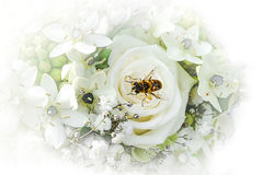 Wedding Bouquet with wasp Stock Photography