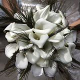 Wedding bouquet from white callas Stock Images