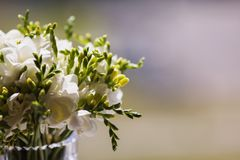 Wedding bouquet of white flowers. On a light background Stock Images