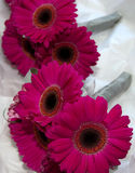 Wedding Bouquets. Pink gerbera wedding bouquets for bridesmaids Royalty Free Stock Photography
