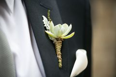 Wedding boutonniere with Echeveria, Dusty Miller, Heather Stock Photography