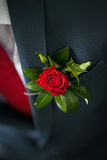 Wedding boutonniere. Of red rose Stock Image