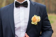 Wedding boutonniere with yellow rose on suit of groom. Groom in blue jacket, white shirt and black tie with boutonniere. Wedding details stock photo